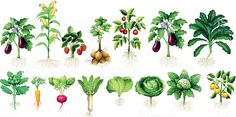 Illustration about Many kind of vegetables with leaves and roots illustration. Illustration of illustration, food, drawing - 67727350 Illustration Main, Vegetable Illustration, Roots Drawing, Leaf Drawing, Kinds Of Vegetables, Root Vegetables, Vegetable Pictures, Flower Drawing Tutorials, Plants