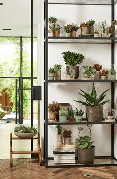 Vette planten: woonplanten van juli