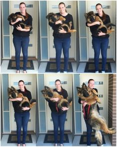 The German Shepherd - This article is all about German Shepherds. We talk about where they got their start and much more, like the American German Shepherd and the not often seen Black German Shepherd. Cute Funny Animals, Funny Dogs, New Puppy, Puppy Love, Big Puppies, Corgi Puppies, Chihuahua Dogs, Pet Dogs, Love Dogs