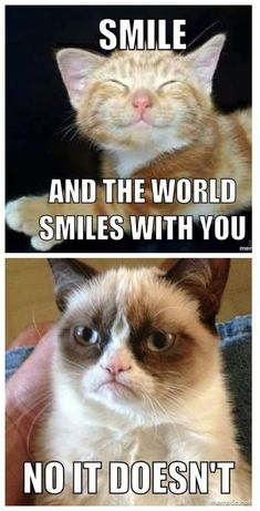 Funny cats, grumpy cats, grumpy cat quotes, grumpy cat humor, funny a Grumpy Cat Quotes, Funny Grumpy Cat Memes, Funny Animal Jokes, Cute Funny Animals, Funny Animal Pictures, Animal Memes, Funny Images, Funny Cats, Grumpy Cats