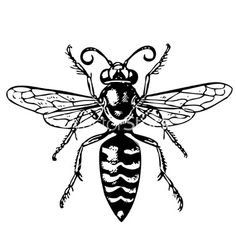 Wasp bembex vector 720663 - by barbulat on VectorStock® Wasp Tattoo, Insect Tattoo, Bee Tattoo, Calvin Klein Slip, Ink Addiction, Arte Sketchbook, Tattoo Flash Art, Time Tattoos, Hornet