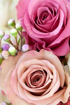 color of the rose by jardinoMe, via Flickr
