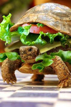 turtle sandwitch lol