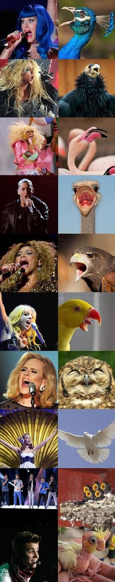 If popstars were birds...