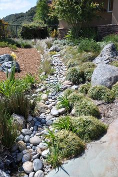 Grasses in Dry Creek Bed | slowaterwiselandscaping #Gardens #Sustainable_Landscaping #Dry_Creek_Bed
