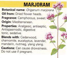 Marjoram (do not use if pregnant? Healing Herbs, Medicinal Plants, Natural Healing, Magic Herbs, Herbal Magic, Natural Health Remedies, Herbal Remedies, Natural Medicine, Herbal Medicine