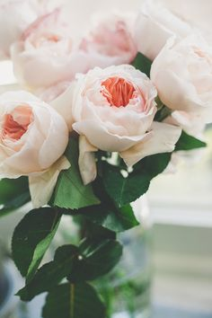 Spectacular Juliet garden roses! // Jane in the Woods Photographie