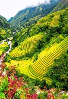 Sapa,Vietnam: terracing