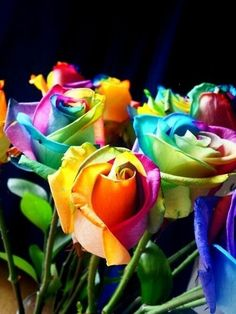 Rainbow roses ❤️ Fun!! Cute you can make theese buy getting white roses then carefully cutting the stem into 4 peices then dipping each one in a different foodcolouring colour or search rainbow roses on yotube