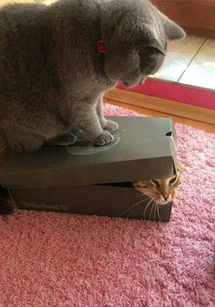 Big kitty throwing his weight around...