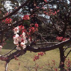 Hama-Rikyu Garden, Tokyo