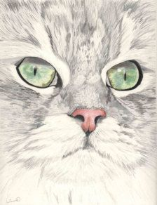Ein Teil of the family von Michele auf Etsy Cats Cloud Drawing, Cat Drawing, Watercolor Cat, Watercolor Paintings, Watercolor Pencils, Animal Paintings, Animal Drawings, Photo Chat, Pencil Portrait