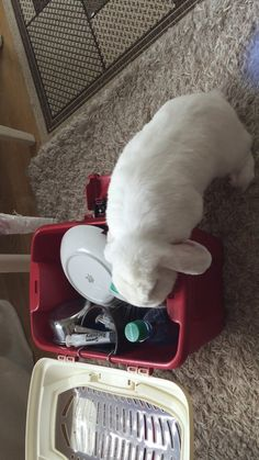 4/2017 Duncan helps mommy packing their bags for Easter Holiday and making sure she´s remembered to bring along their goodies..... (dried Papaya)... Noooommmmmm. As you´ll see he´s pretty much determined what he wants.... :) Inger Johanne on D&D