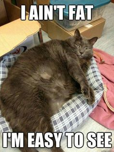 Funny Fat Cat Memes That Look Super Cute And Adorable Fat cats may look a bit unhealthy to some, but they are twice as adorable. Here are 23 fat cat memes for you to enjoy. Funny Animal Jokes, Funny Cat Memes, Cute Funny Animals, Funny Cute, Fat Cats Funny, Funny Humor, Cute Fat Cats, Funniest Animals, Cats Humor