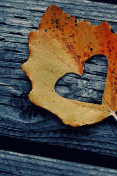 Photo Project:  Heart cut-out on leaf with scene photographed behind it.