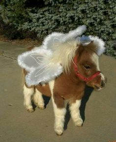 Miniature horse wearing a costume. it's a mini horse angel! Cute Horses, Pretty Horses, Horse Love, Beautiful Horses, Animals Beautiful, Mini Horses, Horse Fly, Funny Horses, Baby Horses