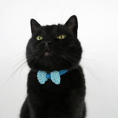 Turquoise Cat Collar Crochet Cat Bow Tie Safety