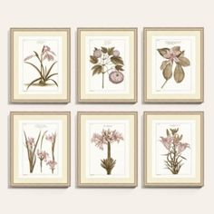 Got new art? Add a Buchoz Dusty Rose Botanical Art Print from the Ballard Designs collection to update your home or office. Style on trend with our Buchoz Dusty Rose Botanical Art Print and love your wall decor! Tree Study, Floral Bedding, Rose Art, Ballard Designs, Baskets On Wall, Botanical Prints, Dusty Rose, Framed Art Prints, Landscape Paintings