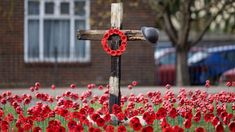 Plastic bottle poppies cover Sutton Remembrance roundabout - BBC News Remembrance Day Images, Remembrance Sunday, Poppy Wreath, Plastic Bottles, Red Flowers, Poppies, Bbc News, Cover, Pet Plastic Bottles