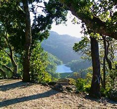 Stunning architecture of Nature in Marin County. Phoenix Lake taken from Kent Woodlands
