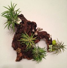 Air Plants and Moss Wall Garden - Living Wall Art - A Unique Birthday or Housewarming Gift Idea Plant Wall, Plant Decor, Air Plants Care, Pot Pourri, Air Plant Display, Garden Living, Cactus Y Suculentas, Trees To Plant, Houseplants