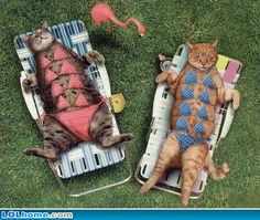 Modest Sunbathers - Funny Animal Pictures Crazy Cats, Funny Dogs brings daily updates of Funny Crazy Animals. Funny Cat Photos, Funny Animal Pictures, Funny Animals, Cute Animals, Crazy Animals, Funny Images, I Love Cats, Crazy Cats, Cute Cats