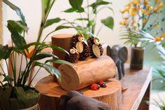 Corujas feitas com pinha e joaninhas de casca de nozes Planter Pots, Safari Party, Creativity, Ladybugs, Owls