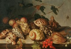 Unknown (Dutch) Still Life with Shells and Insects 17th century