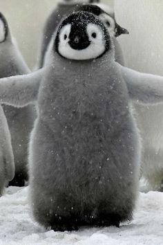 Cuties #Animals