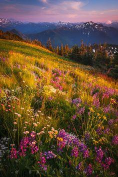 'The Spectrum' Mount Rainier National Park, August 12, 2011 by Bryan Swan on Flickr.