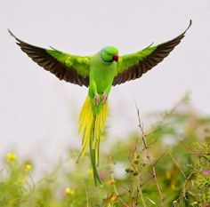 Salve a Amazônia