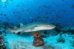 Sharks dont belong