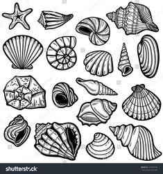 Large set of black&white graphic sea shells. Isolated objects on white background. Retro style.