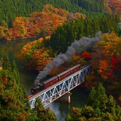 Colored leaves and Steam by Masaki Takashima on 500px