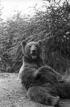 A bear, named Wojtek, reportedly fought alongside his fellow Polish soldiers at the savage Battle of Monte Cassino in the spring of 1944, carrying heavy crates of mortar shells. With the approval of the Polish high command, the company's emblem was then changed to one showing a bear carrying a massive artillery shell. After the war, Wojtek lived in Edinburgh Zoo until his death in 1963. Books, statues and even a documentary keep the memory of his unique service alive.