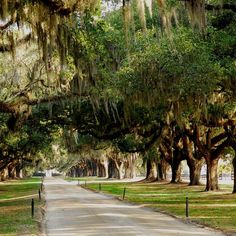 A sunny day for a visit to one of South Carolina's eminent plantations that dates back to pre Revolutionary War days.  Spring is the ideal time to visit for flowers, emerging greenery and plentiful wildlife.