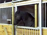 Owners Couldn't Figure Out How Their Horses Kept Escaping - Until They Saw THIS!
