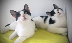 Cool Photos, Cats, Animals, Gatos, Animales, Kitty Cats, Animaux, Animal Memes, Cat Breeds