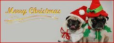 Pug Holiday Themed Facebook Cover Photos For Your Timeline. Pug Christmas Facebook Cover Photo
