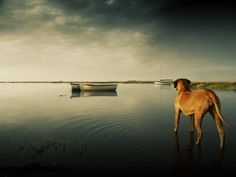 I want a Rhodesian Ridgeback and a canoe and a beautiful place like this.