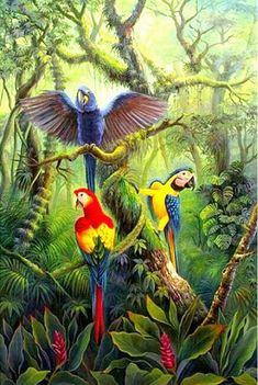 Bird Paintings On Canvas, Cross Paintings, Animal Paintings, Most Beautiful Birds, Beautiful Fantasy Art, Jungle Art, Jungle Animals, Macaw Parrot For Sale, Rainforest Crafts