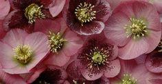 fiori invernali http://www.greenme.it/abitare/orto-e-giardino/12053-10-piante-fioriscono-in-inverno