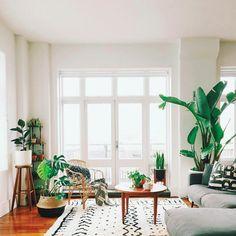 living / rug / plants