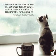 Cat Love Quotes 124 Best Cat Quotes & Truths images in 2019   I love cats, Dog cat  Cat Love Quotes