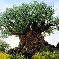 Disney's Animal Kingdom leva você para um encontro com a natureza e a vida animal