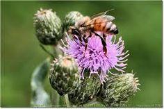 Cooperativa Maia: Il miele di Cardo