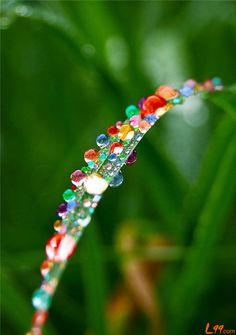 Colorful dew