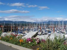 Comox Harbor and Marina Beautiful Places In The World, Wonderful Places, Great Places, Places To Travel, Places To Visit, Mount Washington, Small Island, Vancouver Island, Island Life