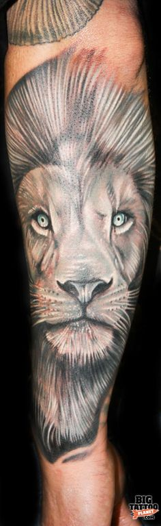 Roman Abrego - Black and Grey White Lion Tattoo