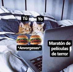 Read memes de michis from the story memes con sabor a awa de uwu by The-Pitz (🦢) with reads. Memes Amor, Quotes Amor, Romantic Humor, Memes Lindos, Ex Amor, Cute Love Memes, Love Phrases, Wholesome Memes, Reaction Pictures